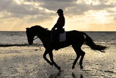 Silhouette of a Horse Rider Cantering on the Beach — Stok fotoğraf