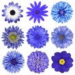 Various Blue Flowers Selection Isolated on White - 图库照片