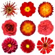 Collection of Red Flowers Isolated on White — Stock Photo