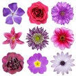 Various Pink, Purple, Red Flowers Isolated on White — Stock Photo
