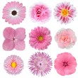 Collection of Pink White Flowers Isolated on White — Stock Photo #8840278