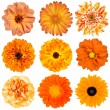 Stock Photo: Selection of Orange Flowers Isolated on White