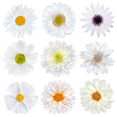 Various Selection of White Flowers Isolated — Stock Photo
