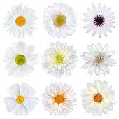 Mais variada selecção de flores brancas isoladas — Foto Stock