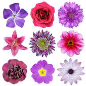 Various Pink, Purple, Red Flowers Isolated on White — Foto Stock