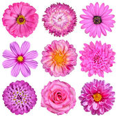 Selection of Pink White Flowers Isolated on White — Zdjęcie stockowe