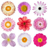 Various Pink, Red, White Flowers Isolated on White — Stock Photo