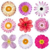 Vari fiori rosa, rossi, bianchi, isolati su bianco — Foto Stock