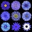 Selection Blue Flowers Selection Isolated on Black — Stock Photo