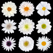 Various Selection of White Flowers Isolated on Black — Stock Photo