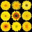 Selection of Yellow Flowers Isolated on Black — Zdjęcie stockowe