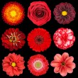 Selection of Various Red Flowers Isolated on Black — Stok fotoğraf