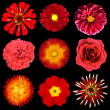 Collection of Red Flowers Isolated on Black Background — Stockfoto