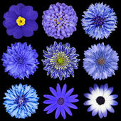Selection Blue Flowers Selection Isolated on Black — Foto Stock
