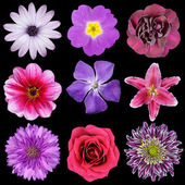 Various Pink, Purple, Red Flowers Isolated on Black — Stock Photo