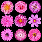 Selection of Pink White Flowers Isolated on Black — Stock Photo