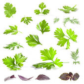 Coriander, parsley, dill and basil leaves — Stock Photo