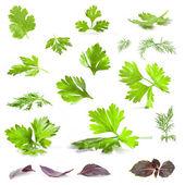 Peterselie, dille, koriander en basilicum bladeren — Stockfoto
