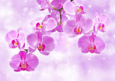 Flowers of orchids — Stock Photo