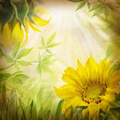 Sunflower flowers and green leaves — Stock Photo