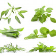 Collection of herbs — Stock Photo