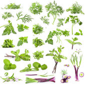 Big collection of fresh herbs — Stockfoto