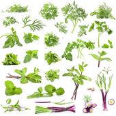 Gran colección de hierbas frescas — Foto de Stock