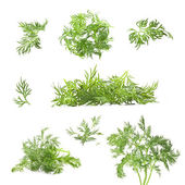 Collection of dill — Stock Photo