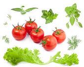 Zbiór zielonych liści i pomidorów — Zdjęcie stockowe