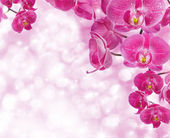 Orchid flowers with water drops — Stock Photo