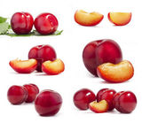 Collection of red plum — Stock Photo