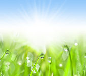 Green grass with water drops — Stock Photo