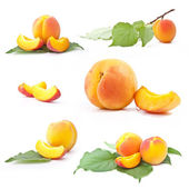 Collection of apricot with leaf — Stock Photo