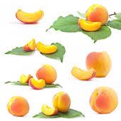 Sammlung von aprikose mit blatt — Stockfoto