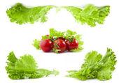 Salat und tomaten — Stockfoto
