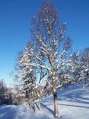 Winterlandschaft in Norwegen — Stock Photo