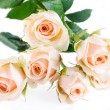 Beautyful roses bouquet — Stock Photo