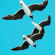 Three gulls hovering in the sky — Stock Photo