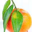 Tangerine with green leaves on a plate - Stock Photo
