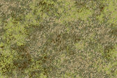 Molded surface — Stock Photo