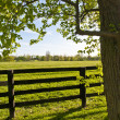 Stock Photo: Country Scenery