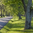 Stock Photo: Country road in Kentucky at spring