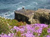 Sea Lions on the Pacific Ocean Coast. — Stock Photo