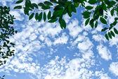 Ciel avec nuages duveteux ci-dessus que vous encadré de branches d'arbres. — Photo
