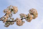 Spring blossom — Foto de Stock