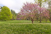 Spring time in Kentucky — Stock Photo