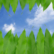 Frame from green leaf  isolated on blue sky  background — Stock Photo