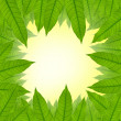 Green leaf frame background — Stock Photo