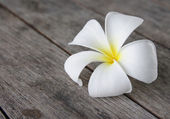 Tropical flowers frangipani (plumeria) on wood — Stock Photo
