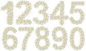 Set of numbers made of tropical flowers frangipani (plumeria) — Stock Photo